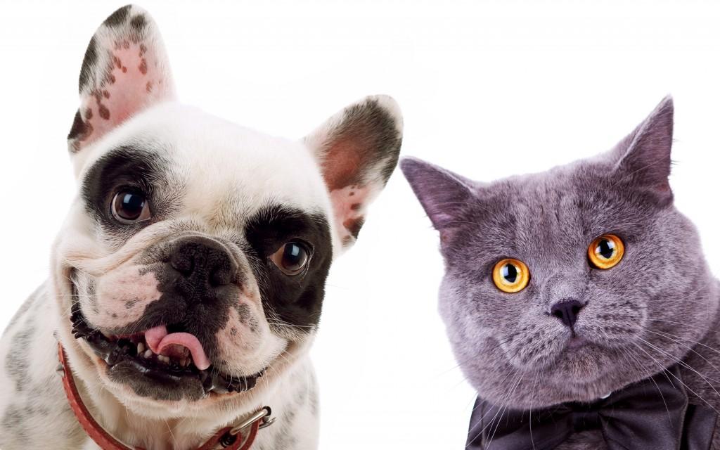 perro y gato asomados