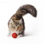 Los 10 nombrés para gatas más populares