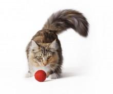 gato con pelota