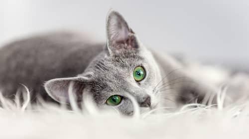 nombre de gato macho color gris