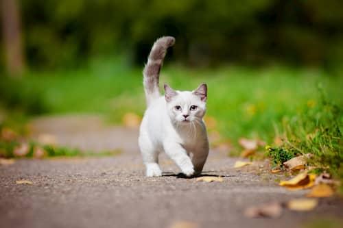 Nombres para gatos blancos machos