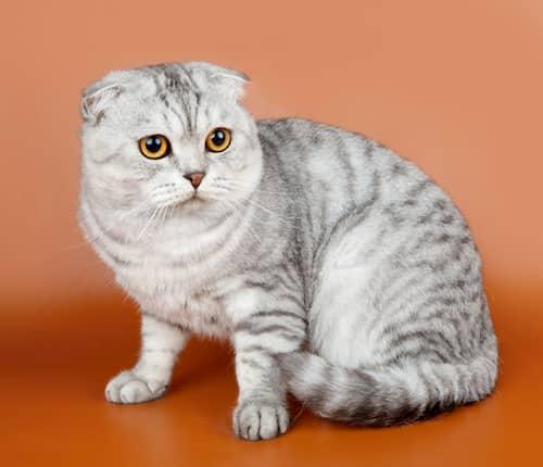Nombres de gatos más bonitos