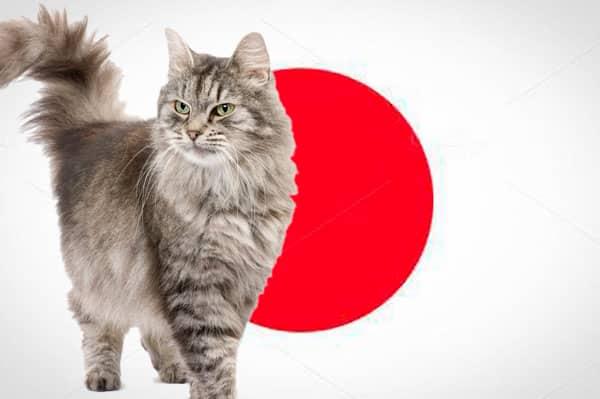 Nombres japoneses de gatos - bandera japón