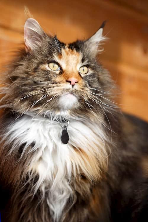 nombres de gatos famosos