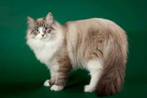 gato macho tierno