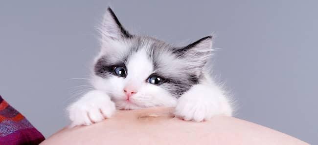 gata blanca y gris kawaii