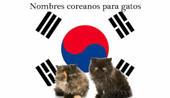 nombres coreanos para gatos