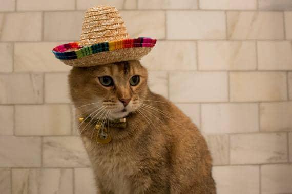 gata hembra mexicana