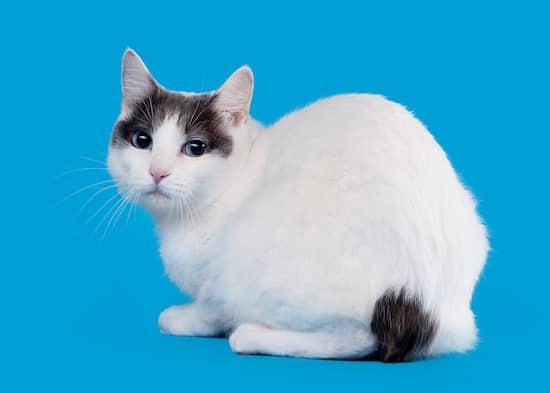nombre para gata blanca