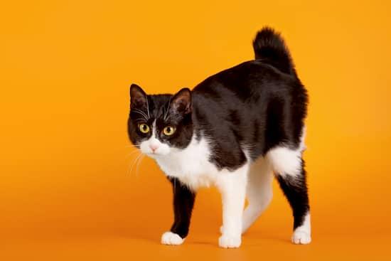 nombres gatas negras y blancas