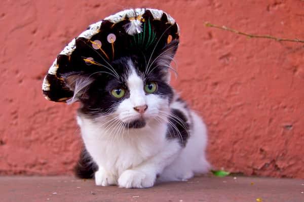 nombres mexicanos para gato macho
