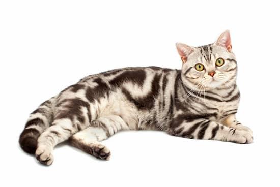 nombres para gatas pequeñas