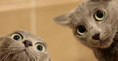 dos gatos grises mirando raro a la cámara