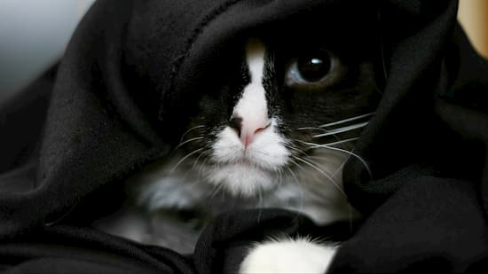 gato negro de star wars