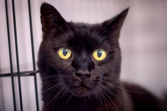 gato negro del cuento de la bruja
