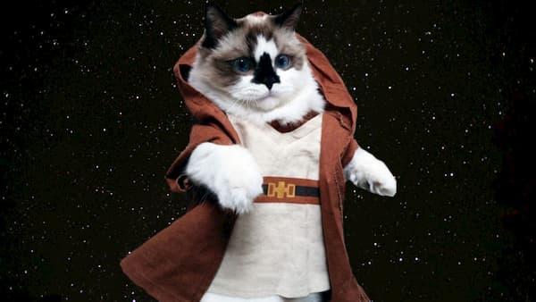 gato tricolor con disfraz de star wars