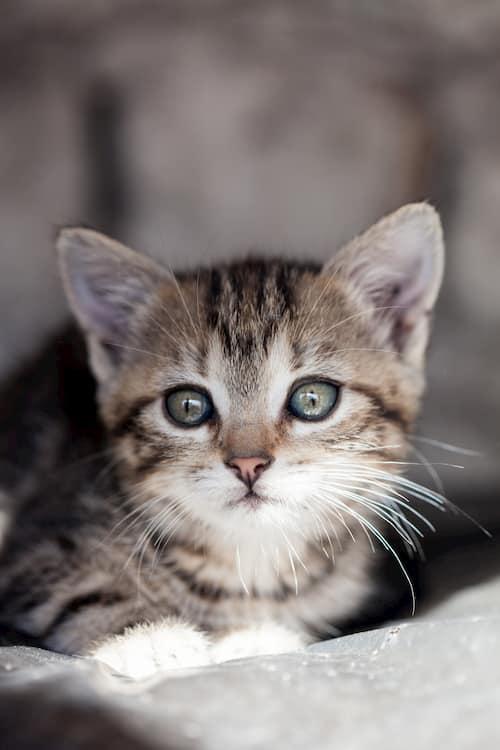 nombres astrologicos para gatos
