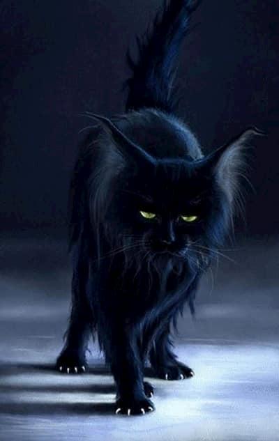 nombres de brujas para gatos