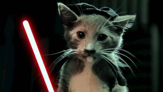 nombres de star wars para gatos