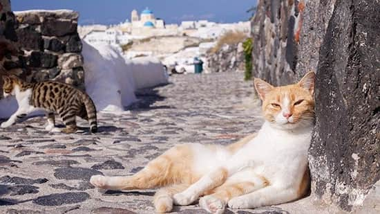 nombres griegos para gatos