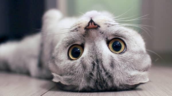 nombres para gatas raros