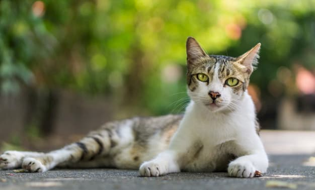 nombres para gatos de tres colores