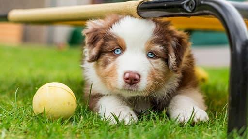 cachorro de nombre Philip