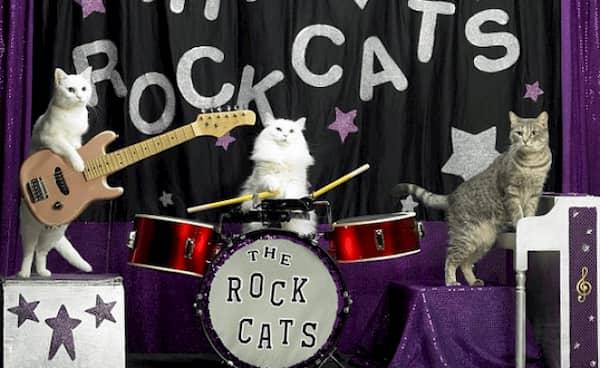 nombres para gatos rockeros