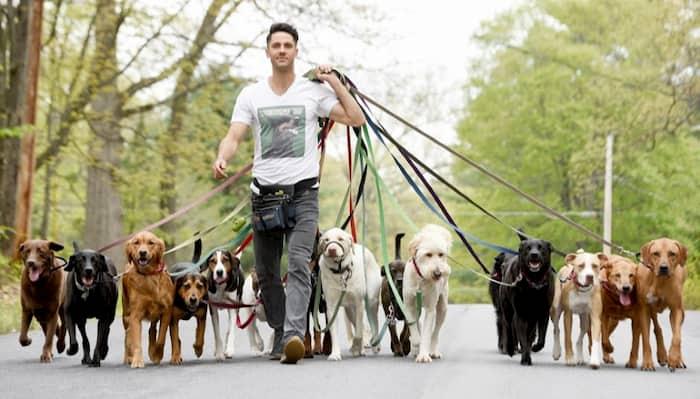 perros paseando con su dueño por el parque