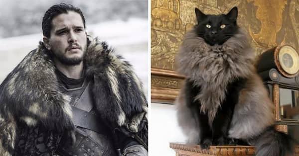 gato con abrigo de juego de tronos