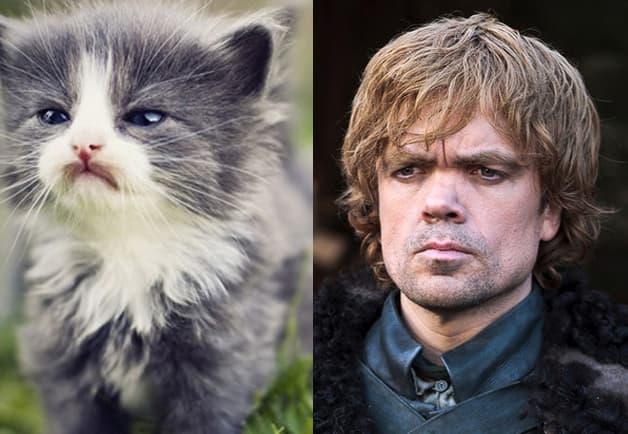 nombres de gatos de juego de tronos