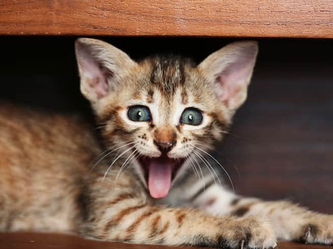nombres para gatos traviesos